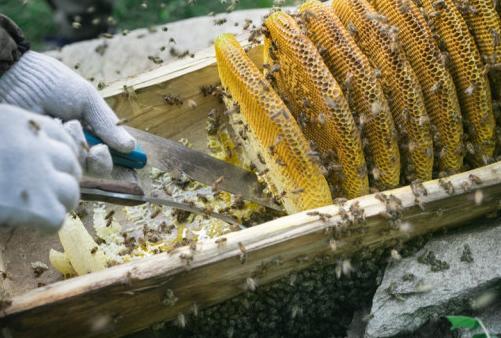 阿里巴巴首个生态脱贫项目落地 让蜜蜂保护野生大熊猫生存环境