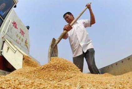 今年国家将组织开展全国政策性粮食库存大清查