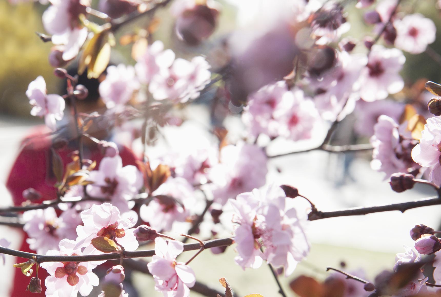 成都人买花将有新去处!锦城绿道沿线10个点位将设花市
