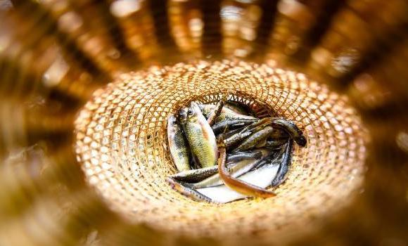 明年四川省所有天然水域全面禁渔