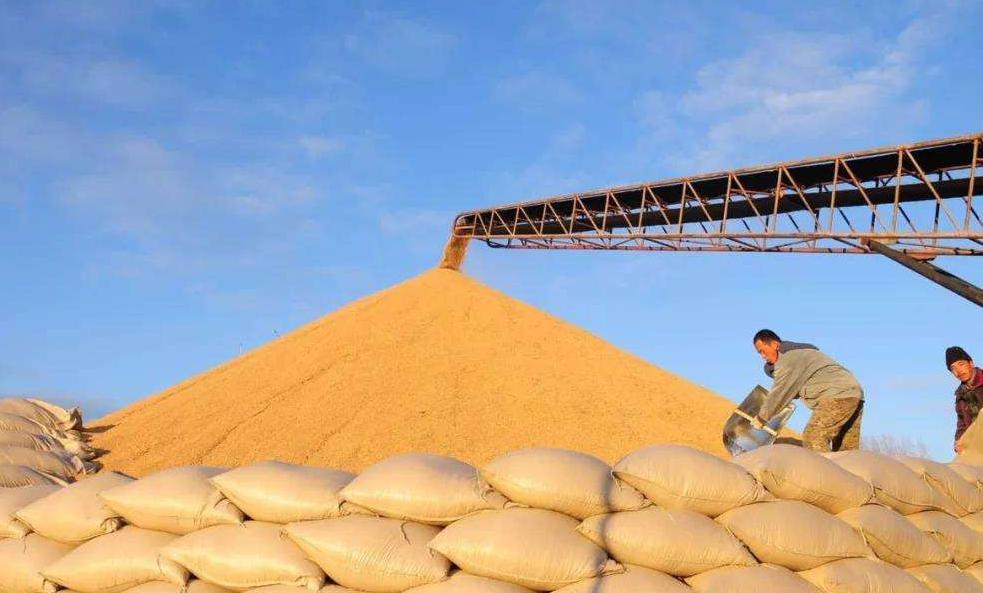农业生产成国民经济运行突出亮点