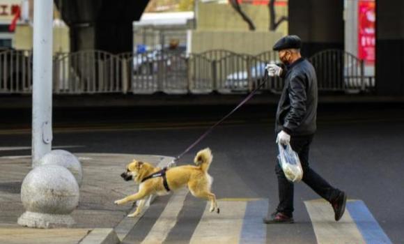 5月新规:出门遛狗必须拴绳!骗保将被重罚