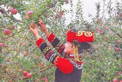 丝路山水 果香盐源 2021四川花卉(果类)生态旅游节暨盐源县第四届苹果节在盐源县举行